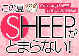 この夏SHEEPがとまらない